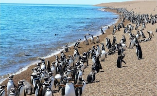 Getaway for the day El Pedral, Penguins & Picnic Lunch