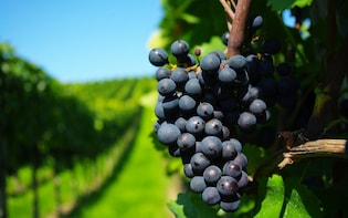 Private Colchagua Valley Wine Tour and Lunch From Santiago