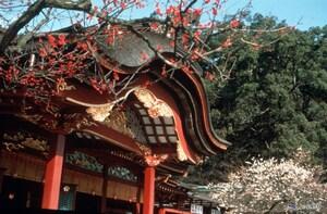 Half-Day Morning Daisuki Fukuoka City Tour+Hotel Pick-up