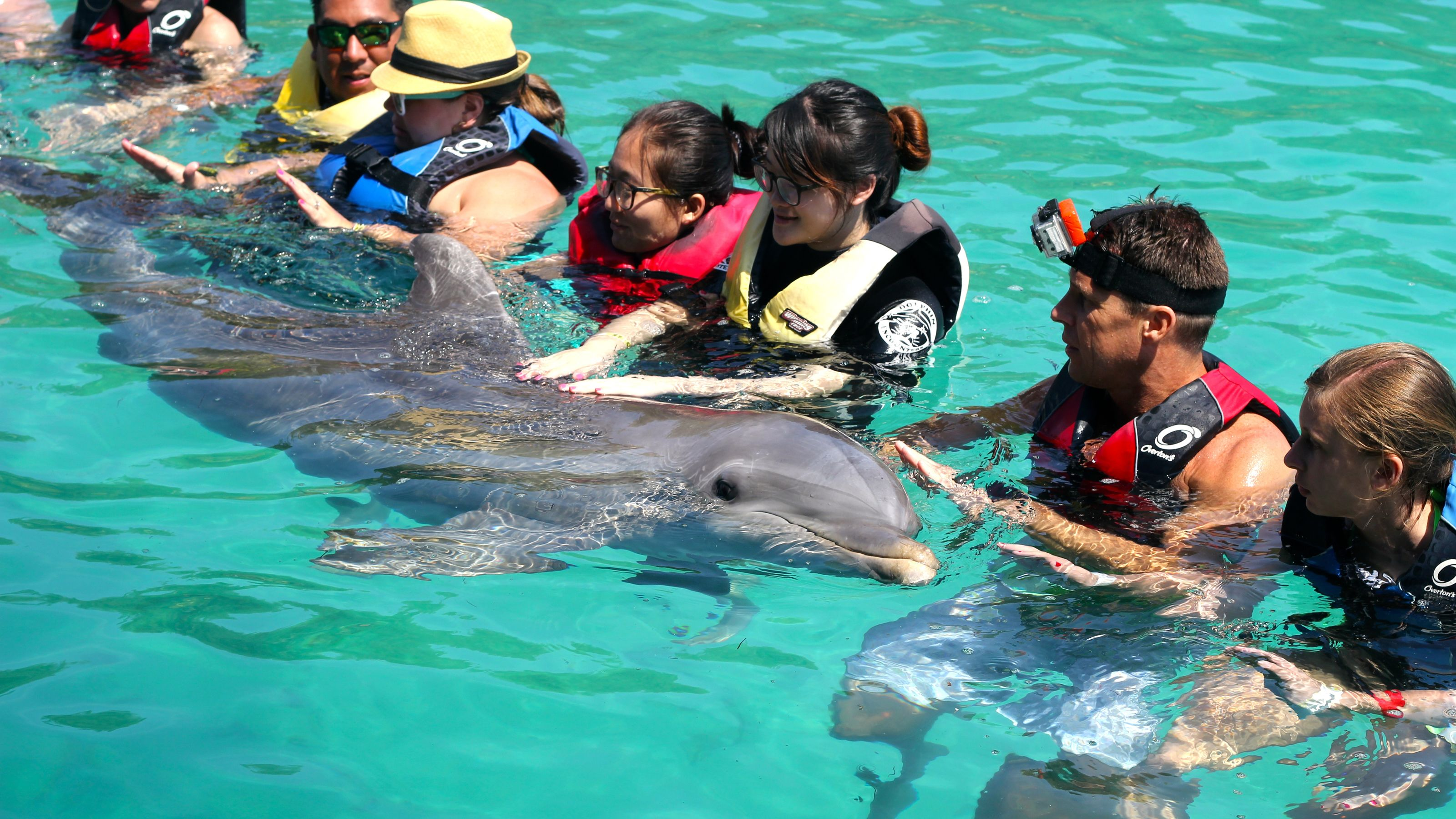 People with a dolphin in Bahamas