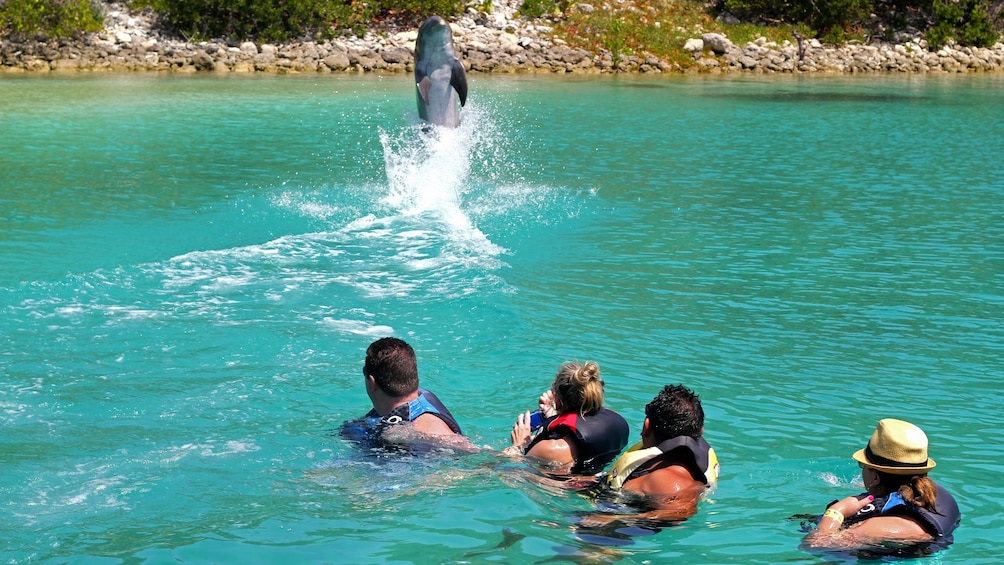 Show item 1 of 4. Dolphin jumping in Bahamas