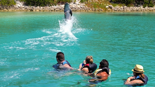 Dolphin jumping in Bahamas