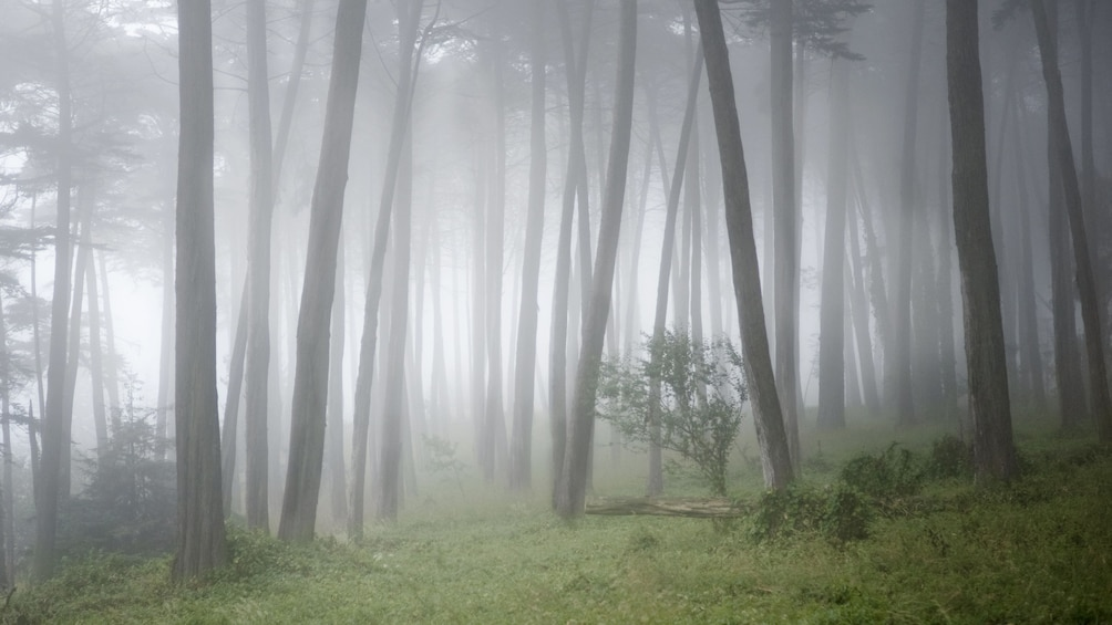 Indlæs billede 10 af 10. View of the trees at Muir Woods National Monument on a foggy day in San Francisco