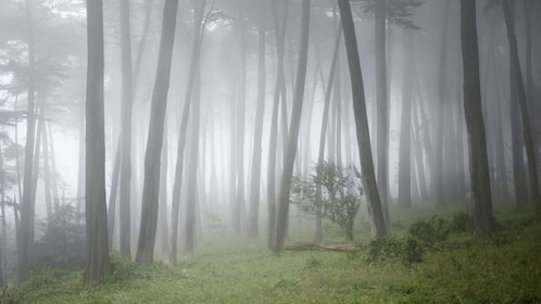 View of the trees at Muir Woods National Monument on a foggy day in San Francisco