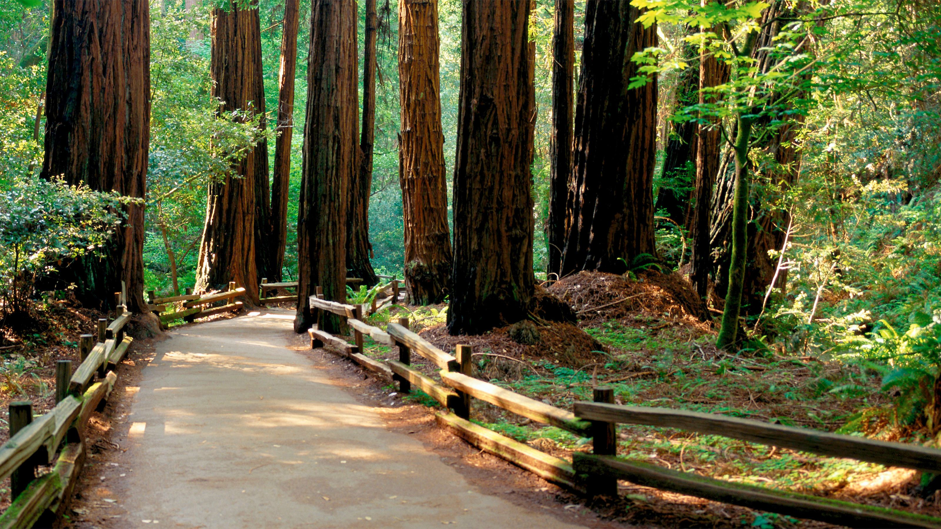 Serene view of the View of the trees at Muir Woods National Monument in San Francisco
