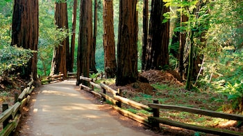 Muir Woods and Sausalito - Return by Bus, Ferry or Bike ride