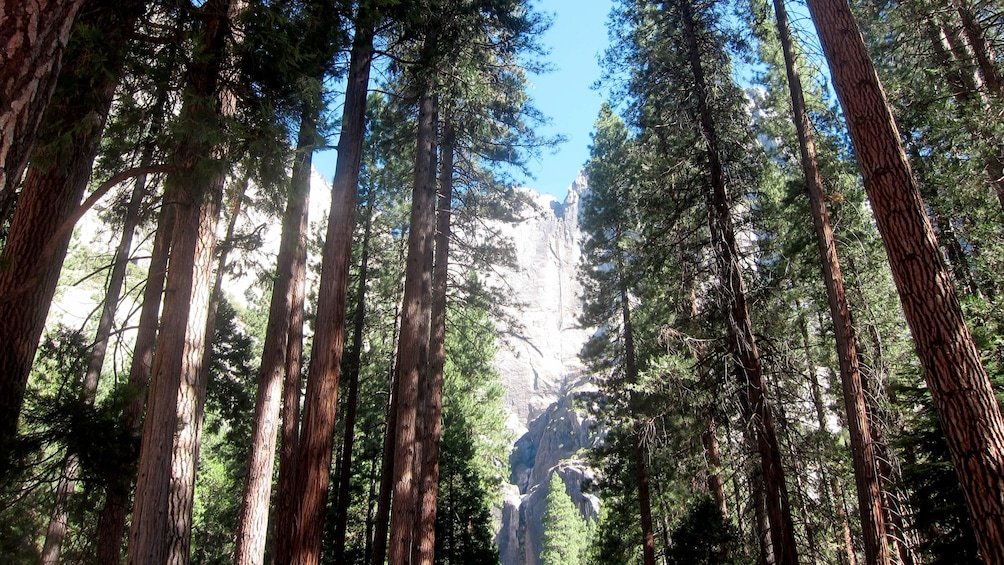 Ver elemento 5 de 10. Beautiful trees in front of the rock formations at Yosemite National Park during a sunny day at the  Yosemite Village