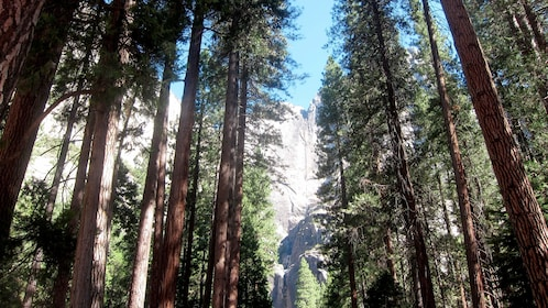 Beautiful trees in front of the rock formations at Yosemite National Park during a sunny day at the Yosemite Village