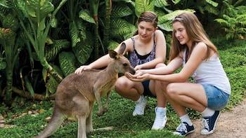 Ingresso al parco Kuranda Koala Gardens