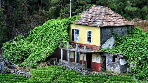 house covered in ivy in portugal