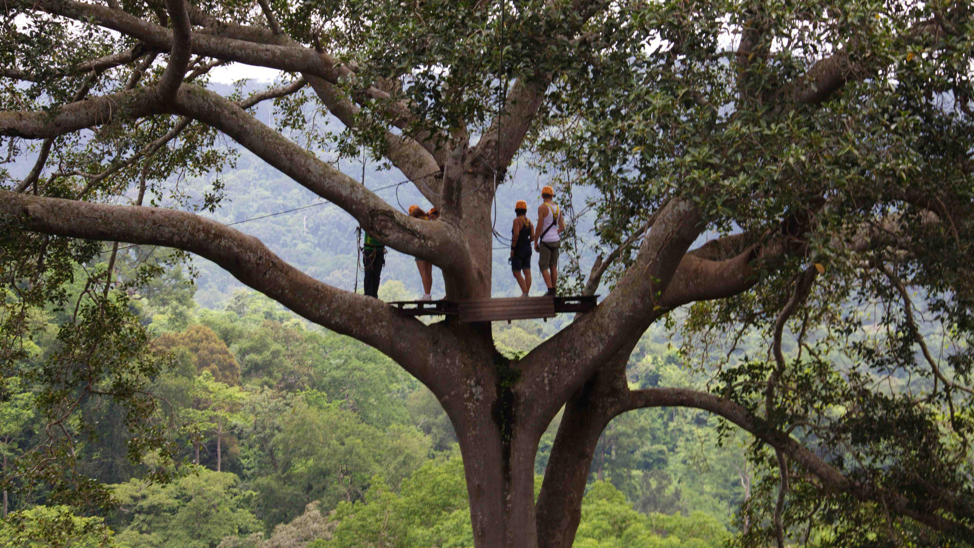People high in trees on zip line platform