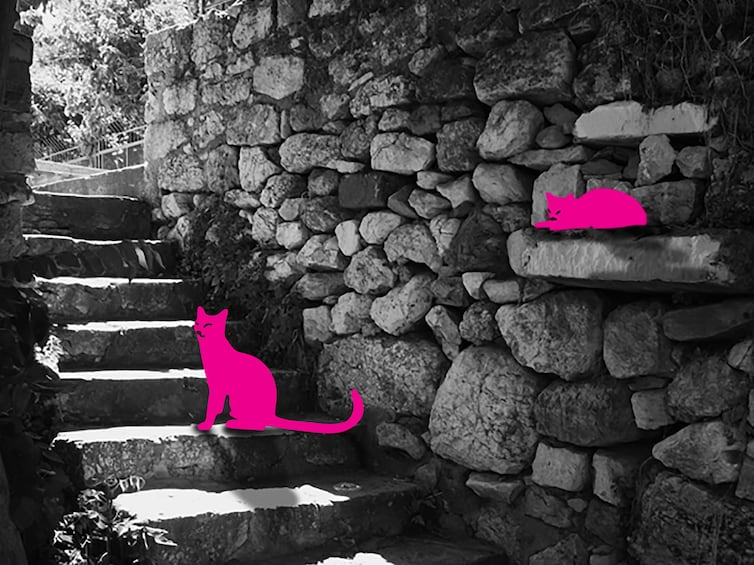 Show item 3 of 5. Athens Plaka: Cats of Athens self-guided Virtual Experience