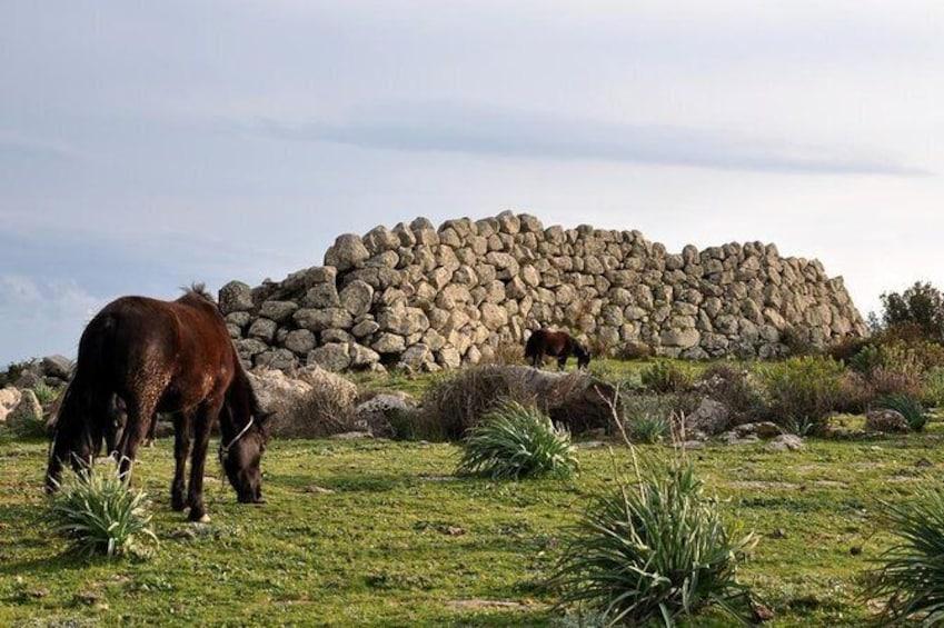 Show item 4 of 13. Giara Plateau - Horse