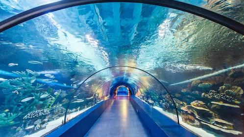 Antalya Aquarium in Turkey