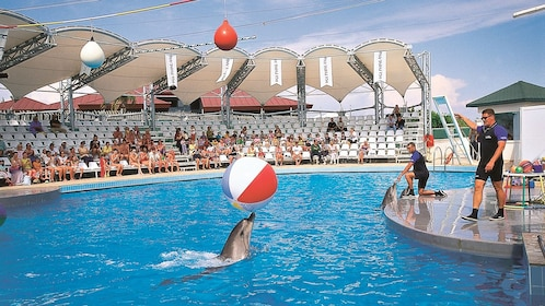 dolphin with ball in show at marmaris