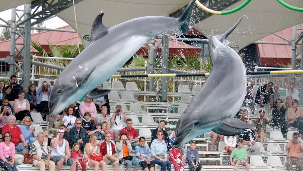 Ver elemento 5 de 5. dolphins in show at marmaris