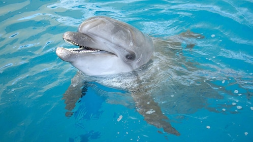 dolphin in show at marmaris