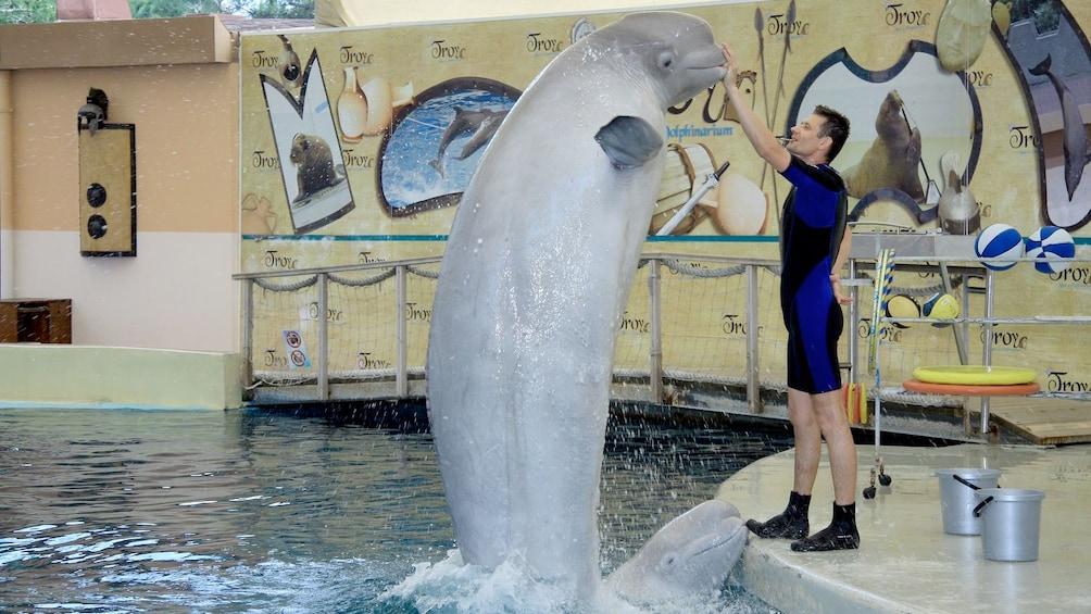 Ver elemento 2 de 5. trainer with porpoise in marmaris