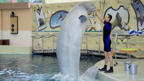 trainer with porpoise in marmaris