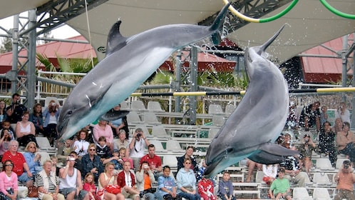 dolphins in show at waterpark in marmaris