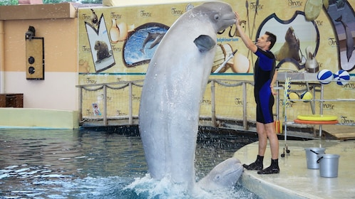 trainer with dolphin at waterpark