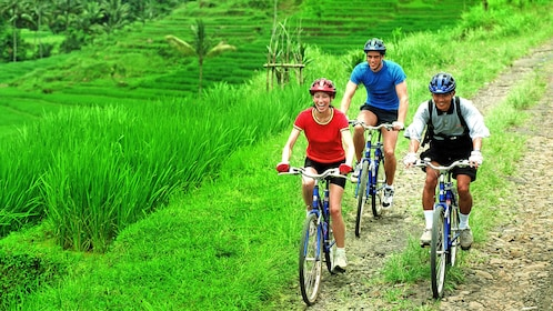 Group of three bike riders riding through grassy area in Bali.