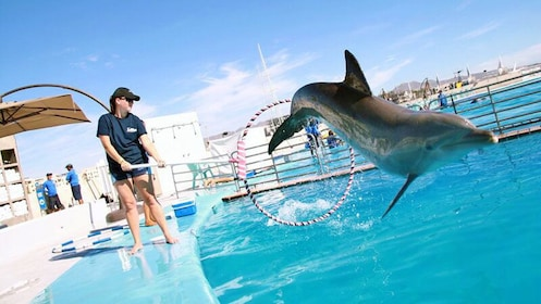 Dolphin jumping through a hoop in Los Cabos