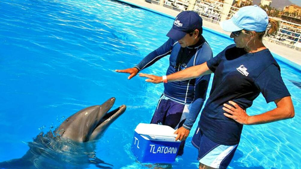 Show item 1 of 10. Dolphin being trained in Los Cabos