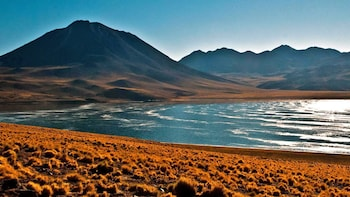 Altiplanic Lagoons, Atacama Salt Flat & Red Stones Full-Day