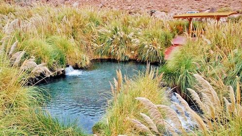 Natural hot spring in San Pedro de Atacama