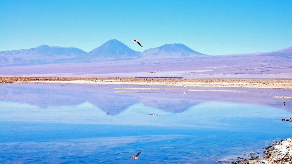 Show item 5 of 5. Tebenquiche Lagoon in Chile