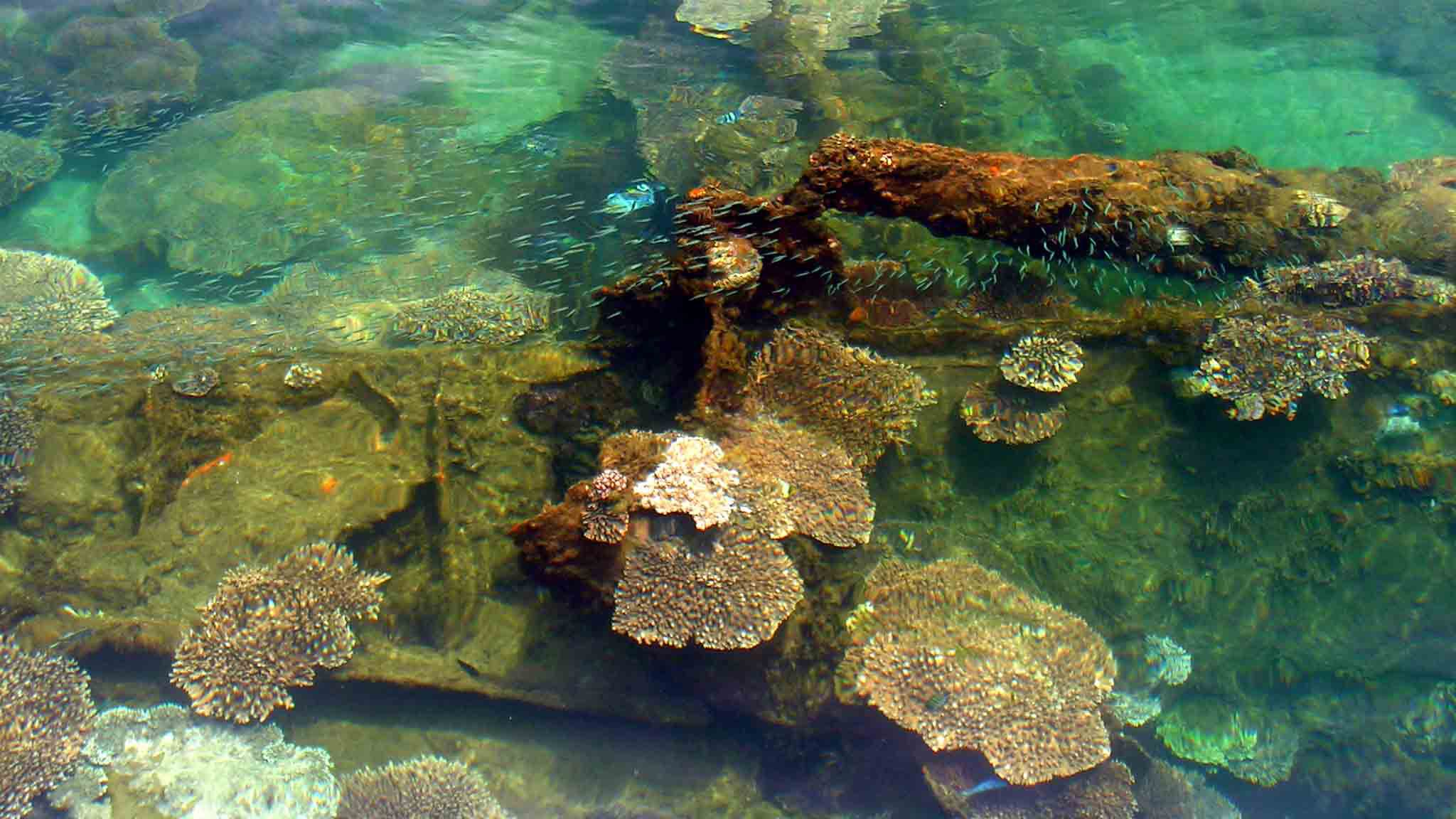 View of coral reefs in Moreton Island