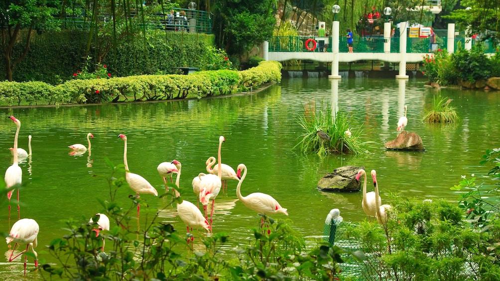 正在顯示第 5 張相片,共 10 張。 Flamingos in pond in Hong Kong
