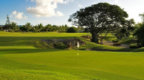 green on golf course in barbados
