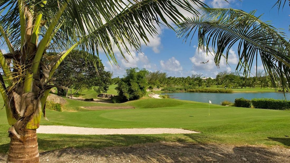 palm tree on golf course in Barbados
