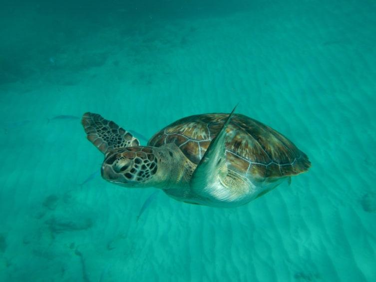 Sun, Sand & Snorkeling