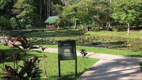 walking through the park in Kota Kinabalu
