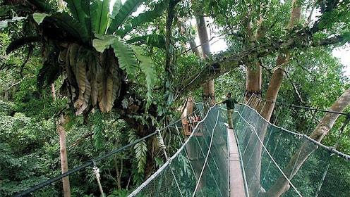 walking across a narrow bridge secured by nets in Kota Kinabalu