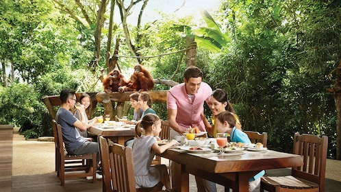 families dining outdoors with orangutans in Singapore
