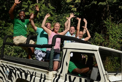 Rainforest Hike & Waterfall Safari