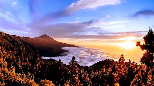 Mountain and trees above the fog at sunrise in Teide National Park