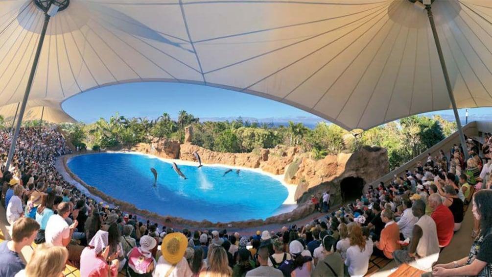 Indlæs billede 3 af 5. Dolphin show at Loro Parque