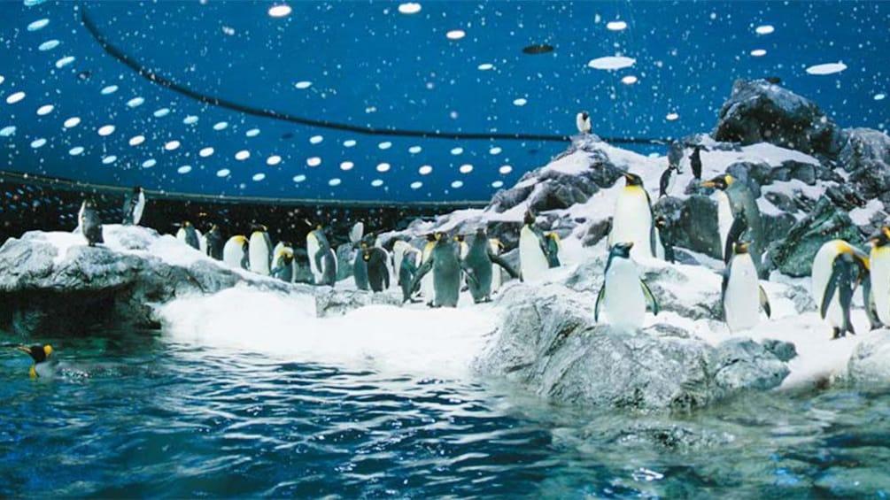 Indlæs billede 2 af 5. Penguin exhibit at Loro Parque