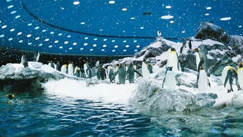 Penguin exhibit at Loro Parque