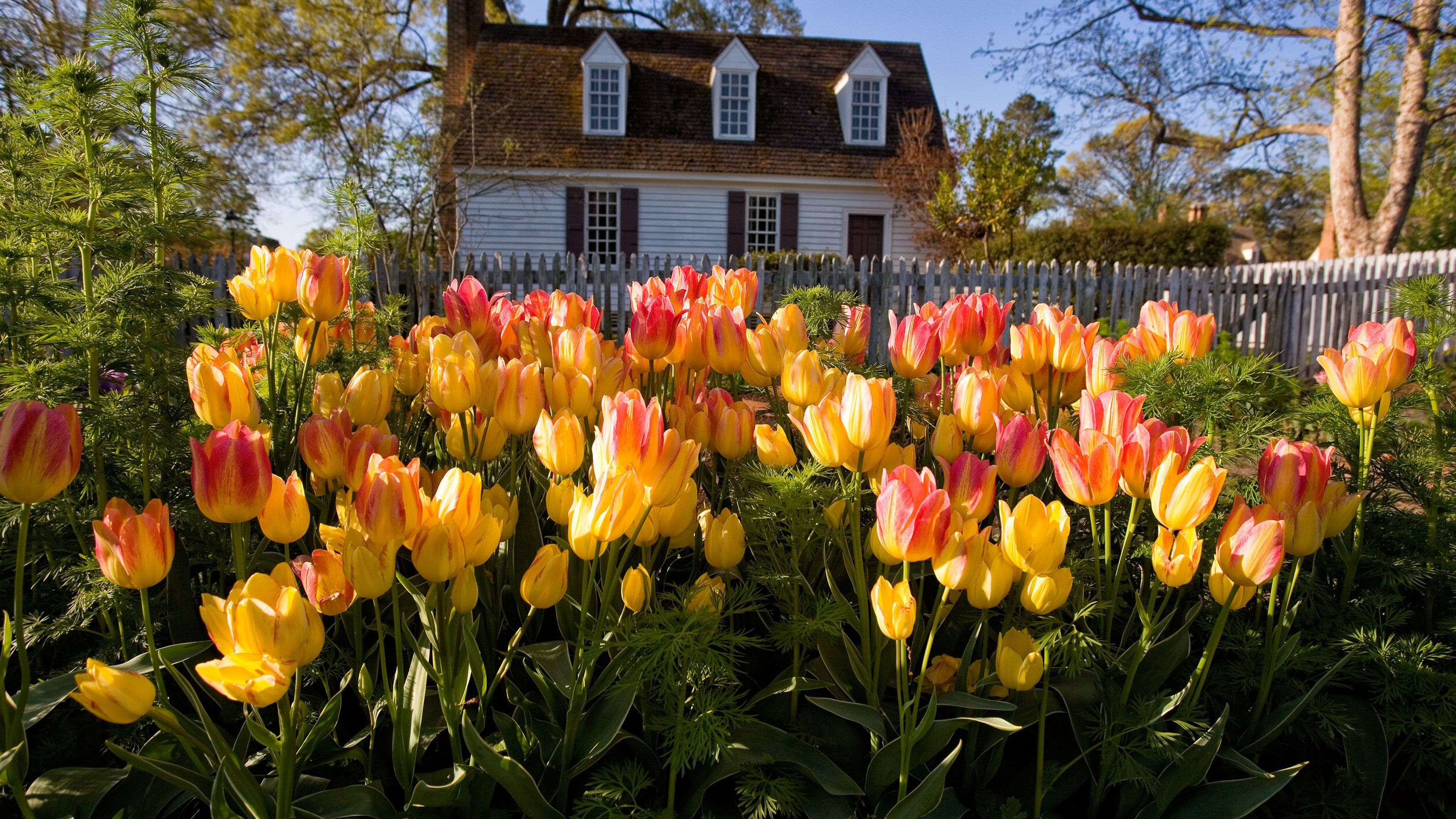 Colonial Williamsburg: The Revolutionary City