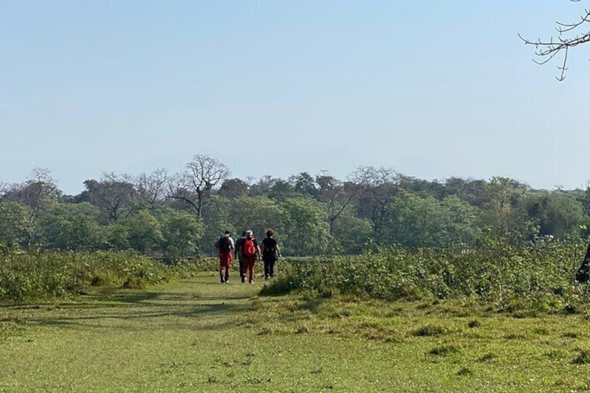 Show item 4 of 8. Canoeing and Nature Walk in Chitwan National Park