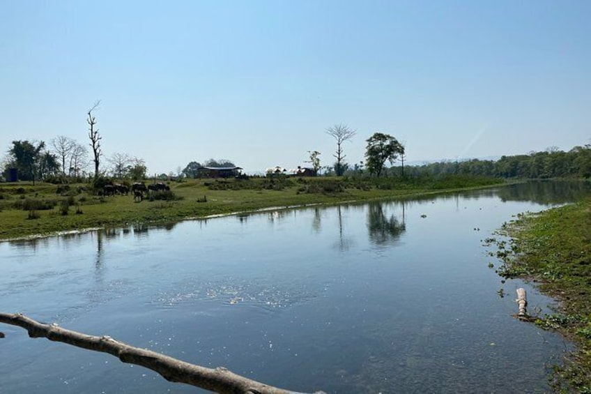 Show item 2 of 8. Canoeing and Nature Walk in Chitwan National Park