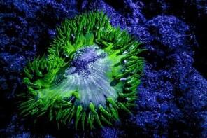 Glow Night Diving