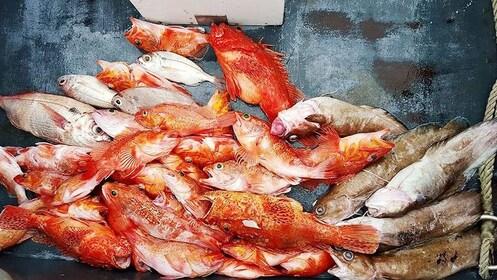 Freshly caught fish in Porto