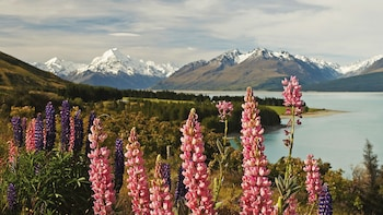 Mount Cook Day Tour: Christchurch to Queenstown